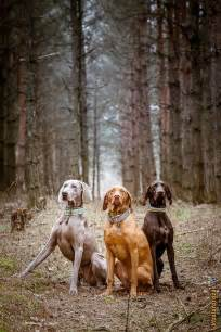 best 25 hunting dogs ideas on pinterest