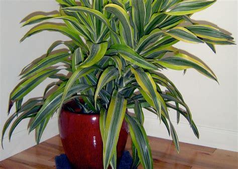 plante sans entretien interieur 28 images pack plantes d 233 polluantes l achat vente plante