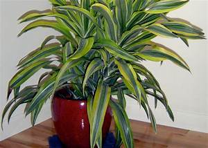 Grande Plante D Intérieur Facile D Entretien : plante d interieur facile a entretenir maison design ~ Premium-room.com Idées de Décoration
