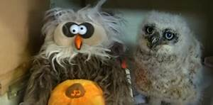 Orphaned Baby Owl Dances and Sings Article Cats