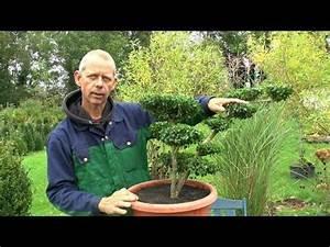 Kirschlorbeer Selber Ziehen : 27 besten detlef r misch bilder auf pinterest bonsai blumen und garten ~ Orissabook.com Haus und Dekorationen