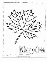 Maple Leaf Coloring Pages Syrup Printable Leaves Template Tree Outline Printables Blank Collection Colouring Collecting Autumn Identification Clrg Drawings Wonderweirded sketch template