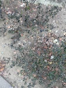 Desherbant Mauvaise Herbe : mauvaises herbes page 2 paris c t jardin ~ Premium-room.com Idées de Décoration