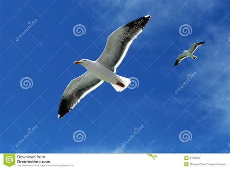 birds stock photo image 4788290