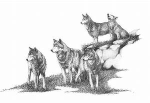 Pack Of Wolves Howling Drawing