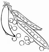 Peas Coloring Printable Pages sketch template