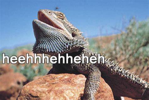 Lizard Meme - image 804864 laughing lizard hhhehehe know your meme