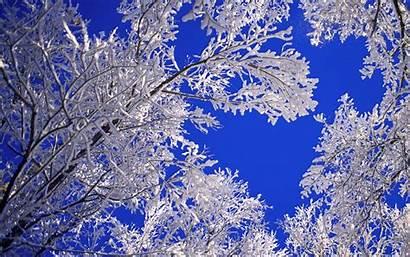 Scenes Snow Winter Wallpapersafari