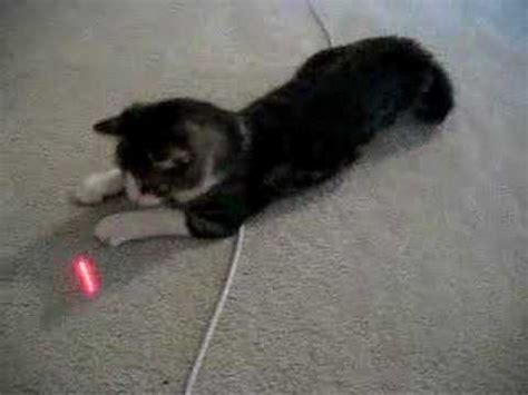 cat laser light cat and laser light