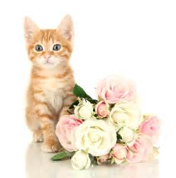 are roses toxic to cats learn about flowers toxic to cats