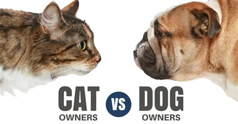 best for cat owners the little things ᗚ that that separate and unite cat owners ᗐ vs vs dog owners us9