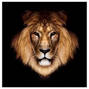 Tete Animaux Deco : sticker tete de lion art d co stickers ~ Teatrodelosmanantiales.com Idées de Décoration