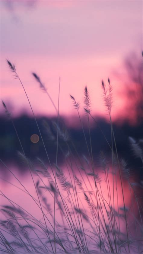 wallpaper lake  hd wallpaper grass sunset purple