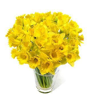 1000+ Ideas About Daffodil Images On Pinterest  Flower Images, Vintage Flowers And Rose Images