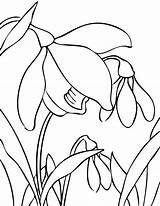 Flowers Flower Spring Coloring Snowdrop Drawing Bulb Doodles Line Valley sketch template