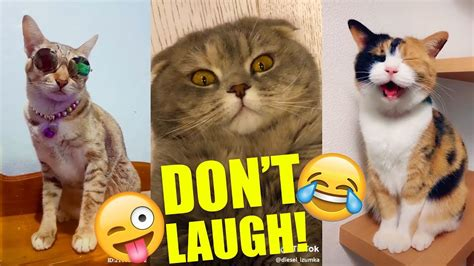 cats   funny youll laugh  head  part