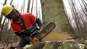 Baum Fällen Technik : rger mit der versicherung wenn der baum in die falsche ~ A.2002-acura-tl-radio.info Haus und Dekorationen