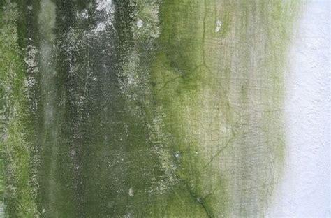 como quitar la humedad de una pared antes de pintarla
