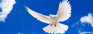 Dove Background Fling White Bird Facebook Cover