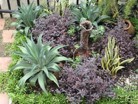 for plants paradise florists blog rockery plants