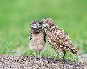 Incredibly Expressive Owl Photography