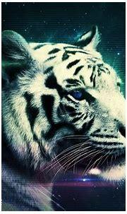 White Tiger HD Wallpaper | Background Image | 2560x1600