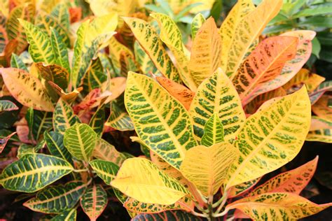 Black Gold Here Are The Best Tropical Foliage Plants For