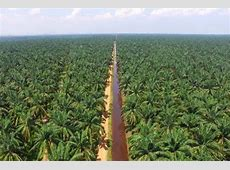 Malaysian palm oil price rebounds from early losses on