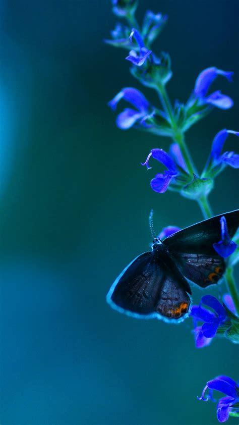 wallpaper butterfly flowers blue animals