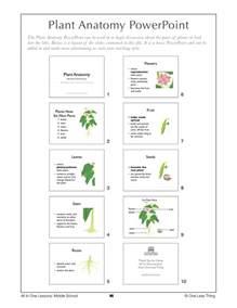 6 09 plant anatomy lesson plan one less thing