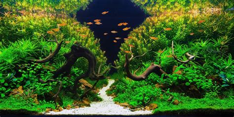 aquascaping  art  science  aquariums