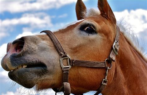 horse fireworks scared cruel fear racing drunk charge being noise arrested yorkmix pet