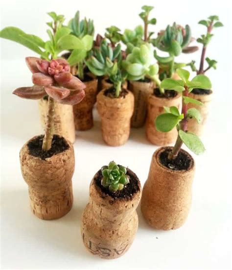 Cork Planters Kreative Bastelideen by Ingenious Wine Cork Planters For Your Plants