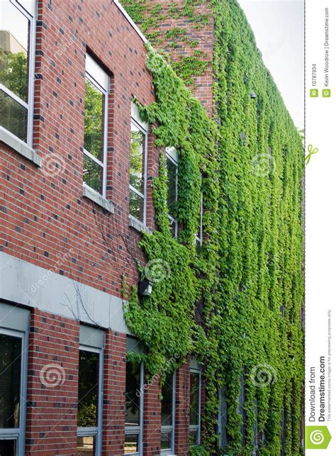 ivy   red brick building stock photo image