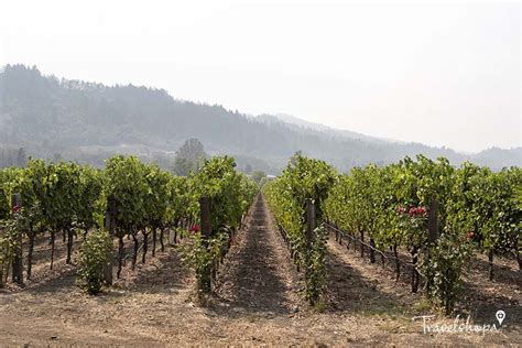 Postcards From Charles Krug Winery, Napa Valley