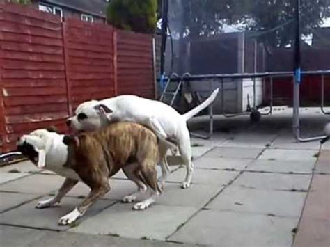 Dogs That Dont Shed by Brutal Dog Fight Savage Attack Not For The Faint