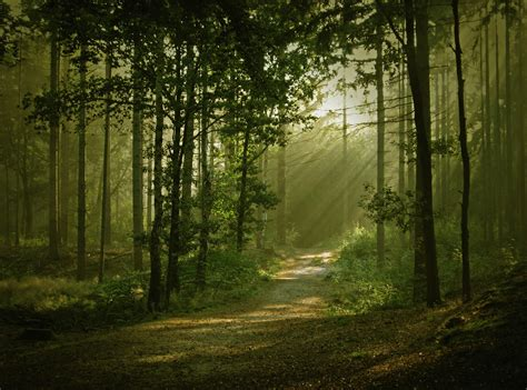 beautiful forest forest wallpapers hd download
