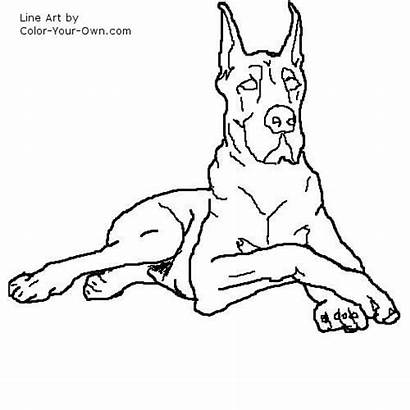Dane Coloring Dog Drawings Pages Drawing Line