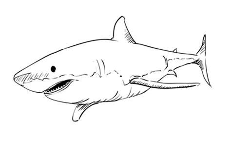 ways  draw  shark wikihow