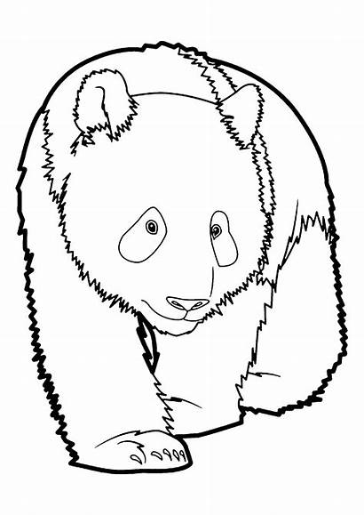 Coloring Pages Pandas Funny Adult Printable Children