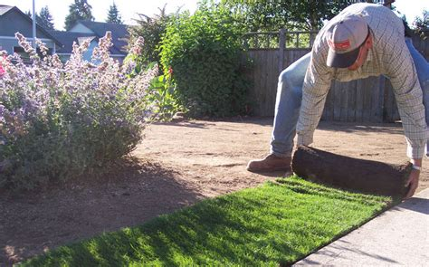 hydro grass seed cost sod vs hydroseeding which is best