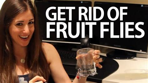 how to get rid of fruit flies easy household cleaning