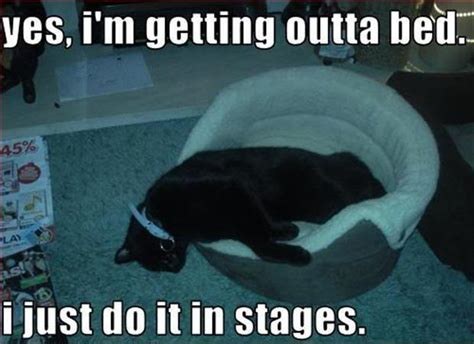 Get Out Of Bed Meme - yes i m getting outta bed i just do it in stages picture quotes