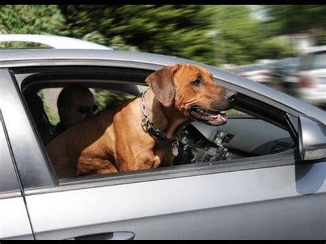 hundetransport im auto hundetransport im auto