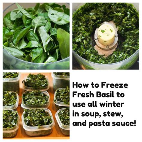 can you freeze basil moved permanently