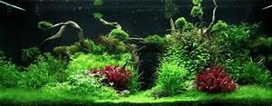Aquarium Einrichten Beispiele : layout 96 my fish ~ Frokenaadalensverden.com Haus und Dekorationen