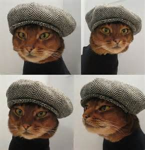 Tabby Cats Wearing Hats Cabbie