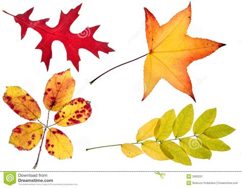 High Resolution Fall Foliage Pictures Four Autumn Leaves Stock Image Image 3583201