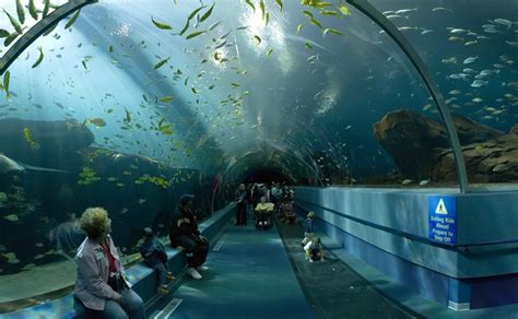 le plus grand aquarium de le plus grand aquarium du monde gurumeditation