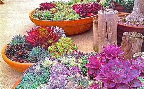 watering succulents in containers easy to grow succulents container gardening